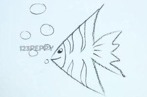 нарисовать пошагово рыбку-ангела карандашом, рисунок  рыбки-ангела, контурный рисунок,  черно-белый