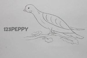 нарисовать пошагово простую птицу карандашом, рисунок  птицы, контурный рисунок,  черно- белый