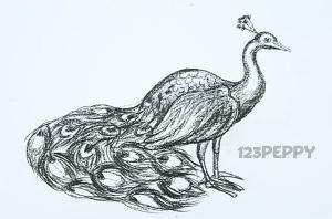 нарисовать пошагово павлина карандашом, рисунок  павлина, контурный рисунок,  черно - белый