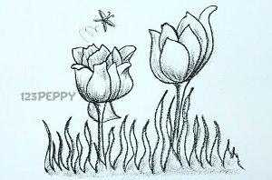 нарисовать пошагово тюльпаны карандашом, рисунок  тюльпанов, контурный рисунок,  черно-белый