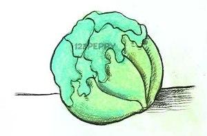 нарисовать пошагово салат карандашом, рисунок  салата, контурный рисунок,  цветной