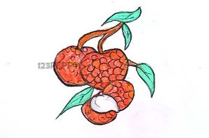 нарисовать пошагово литчи карандашом, рисунок  литчи, контурный рисунок,  цветной