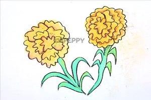 нарисовать пошагово календулу карандашом, рисунок  календулы, контурный рисунок,  цветной