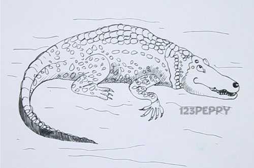 нарисовать пошагово крокодила карандашом, рисунок  крокодила, контурный рисунок,  черно- белый