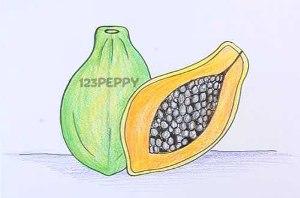 нарисовать пошагово папайя карандашом, рисунок  папайя, контурный рисунок,  цветной