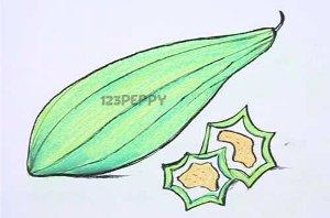 нарисовать пошагово горную тыкву карандашом, рисунок  горной тыквы, контурный рисунок,  цветной