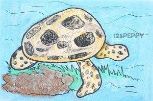нарисовать пошагово морскую черепаху карандашом, рисунок  морской черепахи, контурный рисунок,  цветной