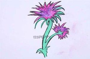 нарисовать пошагово чертополох карандашом, рисунок  чертополоха, контурный рисунок,  цветной