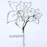амазонскую лилию