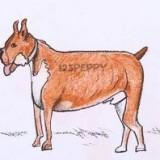 Как нарисовать собаку боксёра