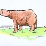 бурого медведя