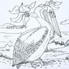 как нарисовать птицу легко