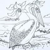 пеликана