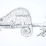 хамелеона на ветке