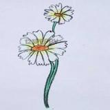 хризантему