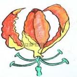 огненную лилию