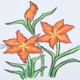 цветы - звездочки