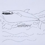 усатого кита