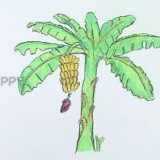 Как нарисовать пальму с бананами