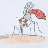 комара