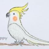 австралийского попугая