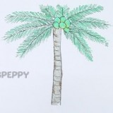 Как нарисовать пальму с кокосами