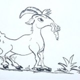 козла
