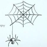 паука и паутину
