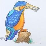 красивую птицу