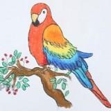 попугая ара