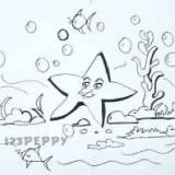 красивую морскую звезду