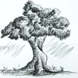 Как нарисовать большое дерево