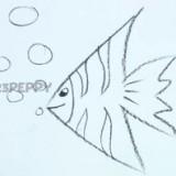 рыбку-ангела