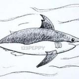 страшную акулу