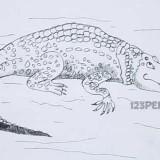 крокодила
