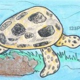 морскую черепаху